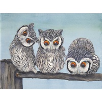 White Faced Scops Owls